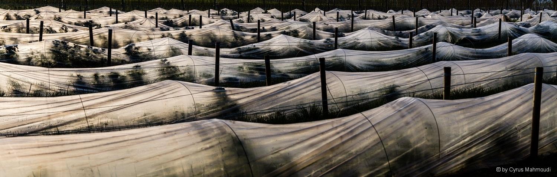 Beerenplantage bei Sulzemoos