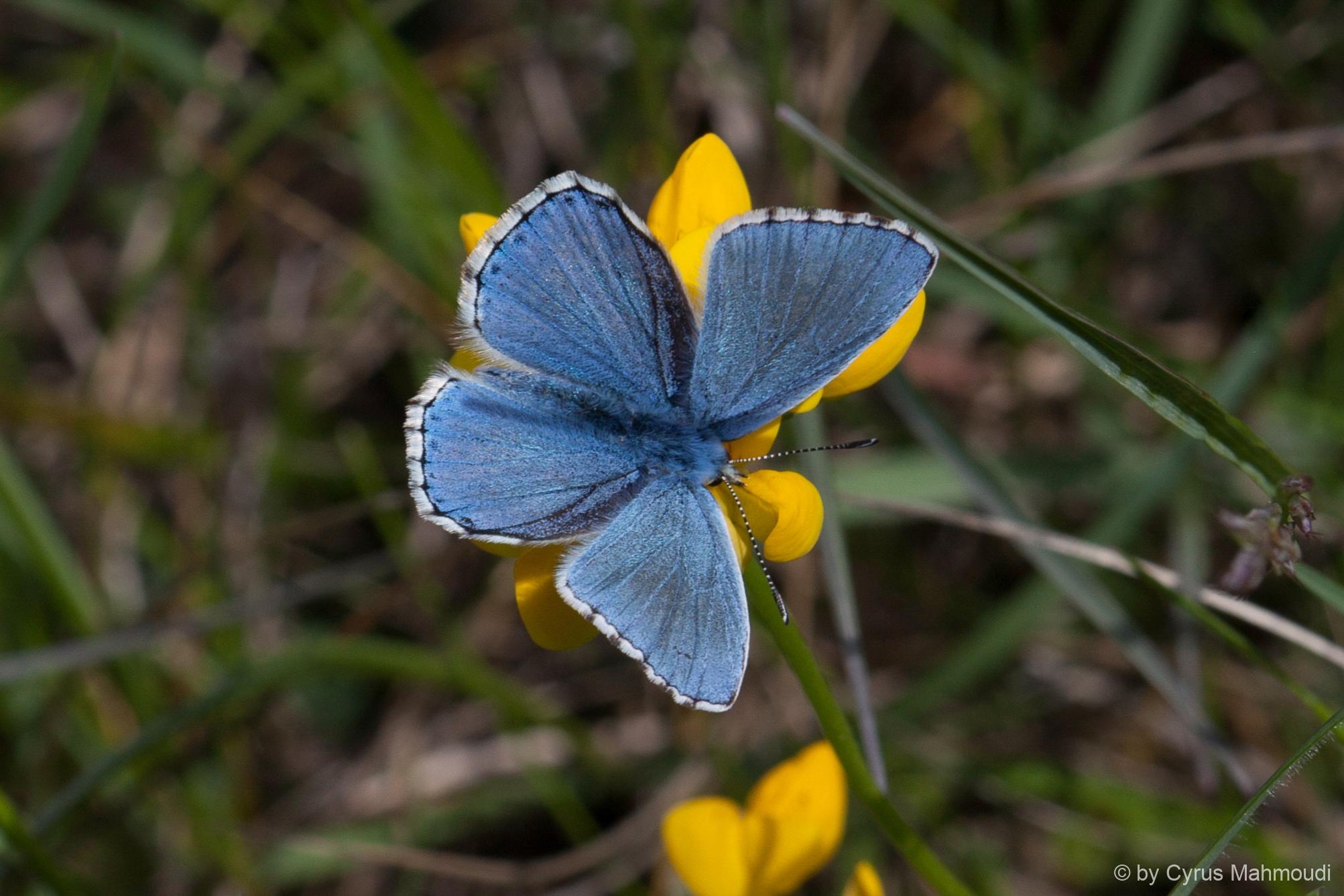 Lepidoptera-1