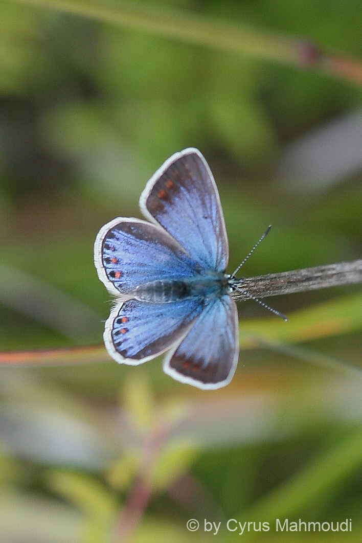 Lepidoptera-10