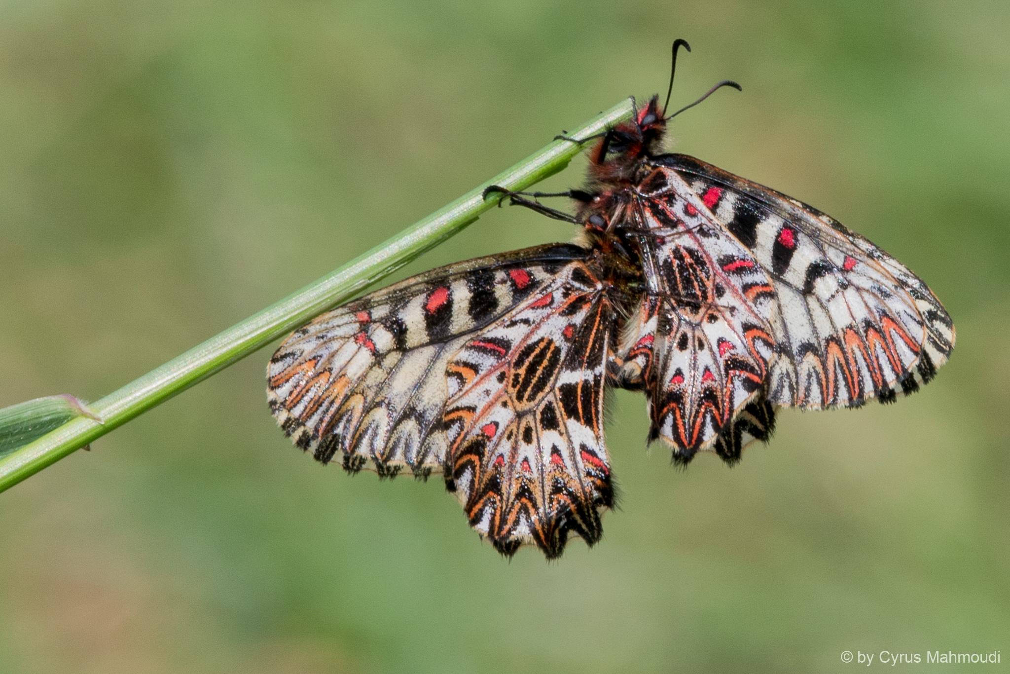 Lepidoptera-122