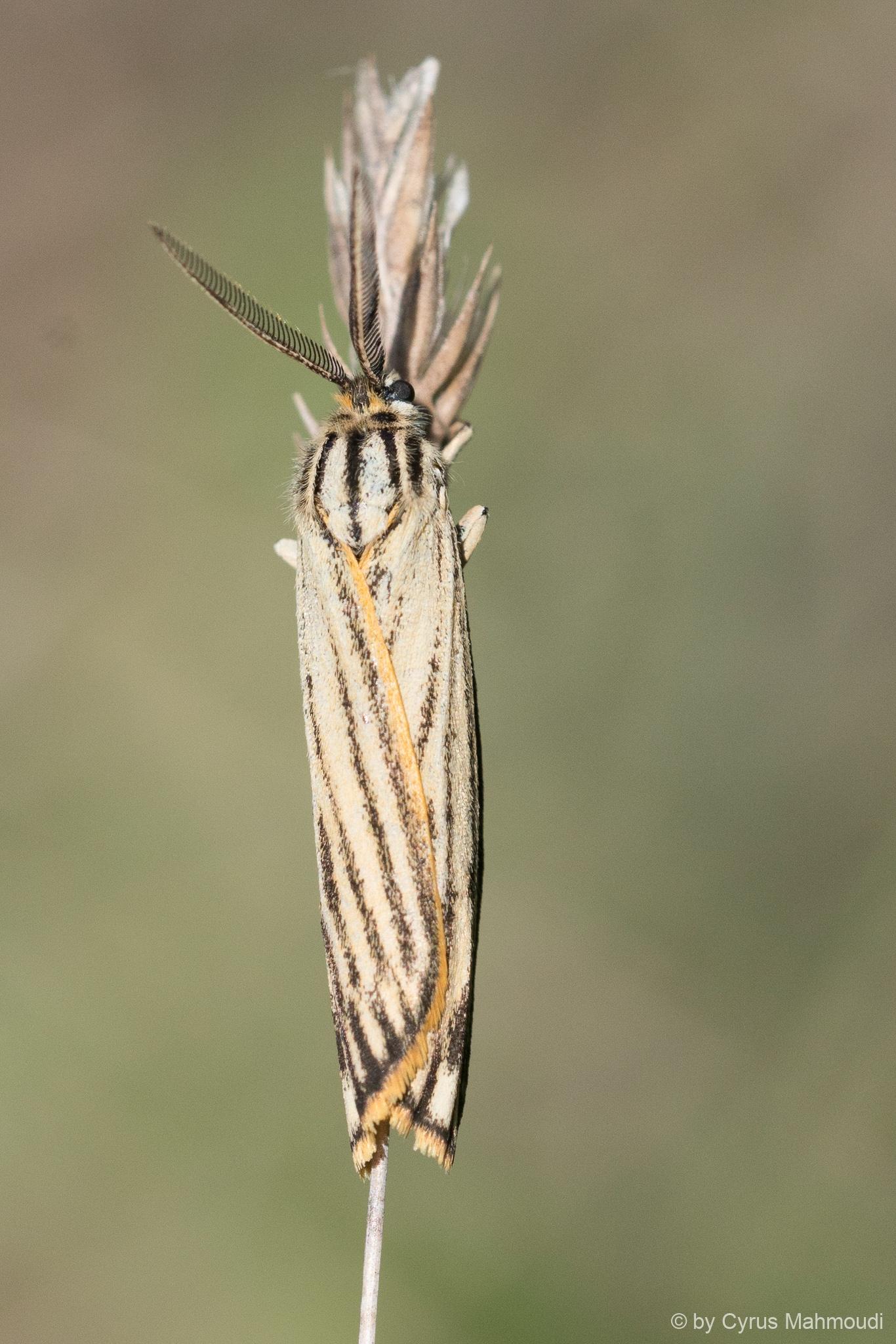 Lepidoptera-124