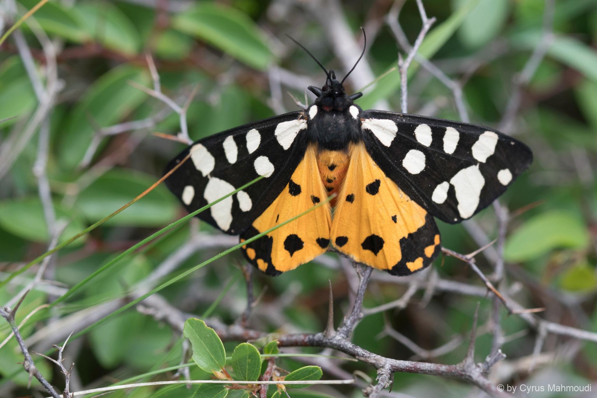 Lepidoptera-126
