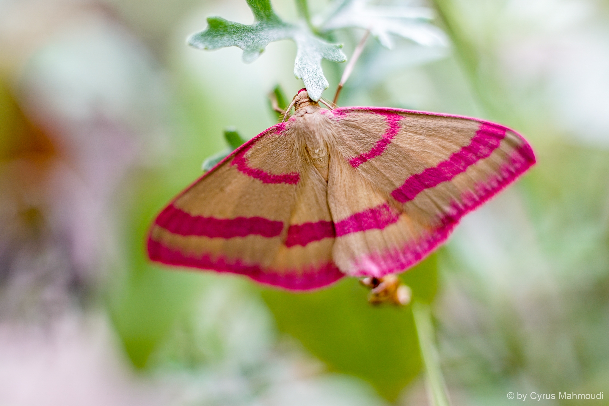 Lepidoptera-70
