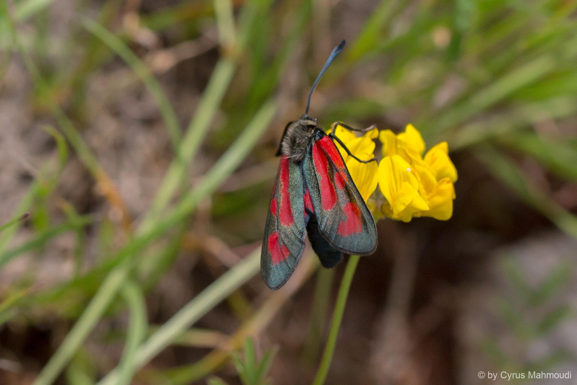 Lepidoptera-81