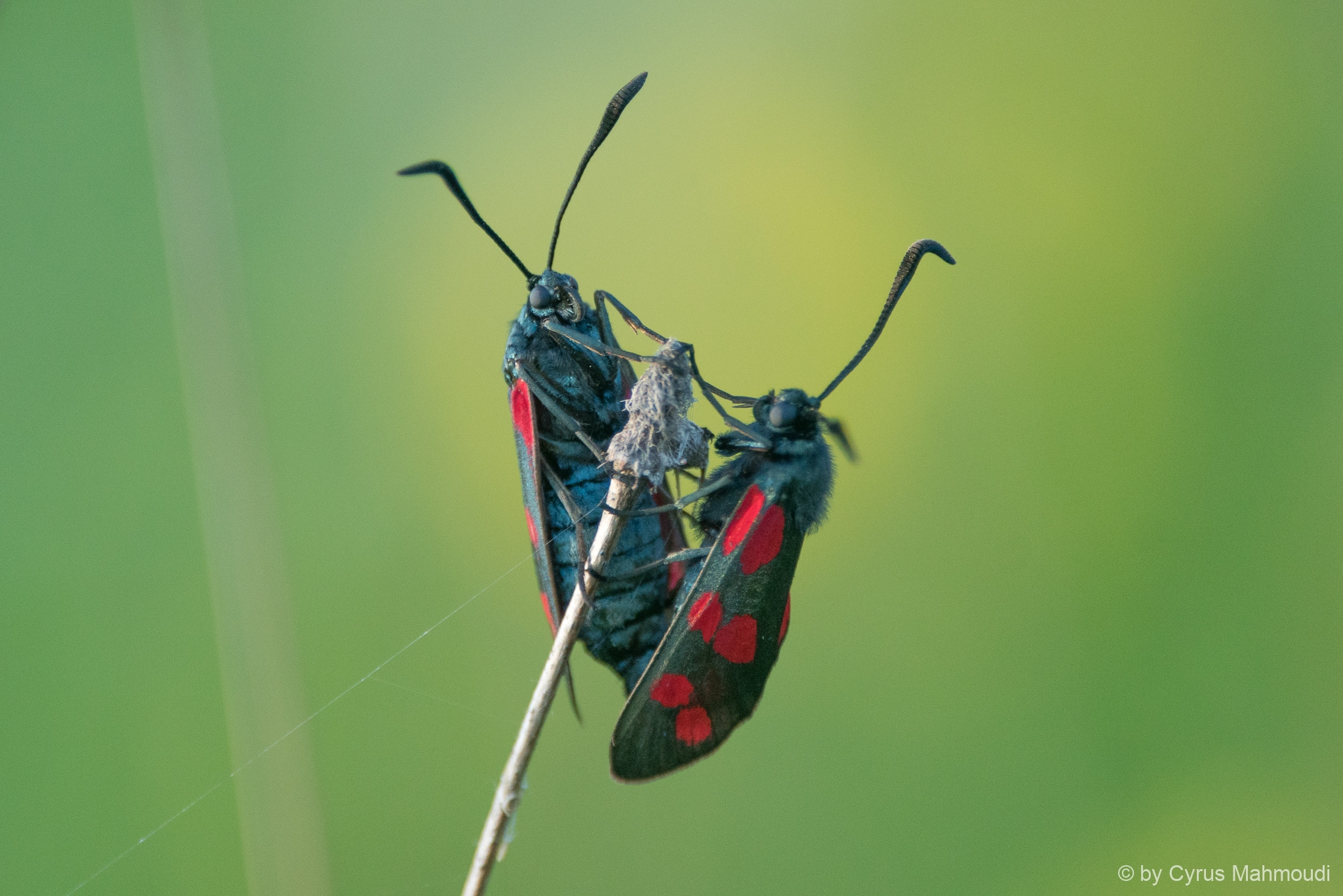 Lepidoptera-82