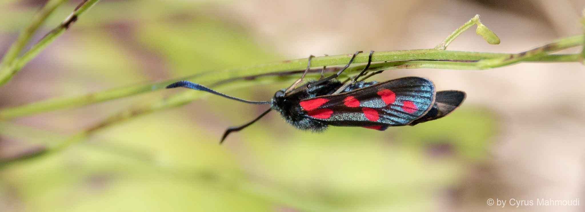 Lepidoptera-85