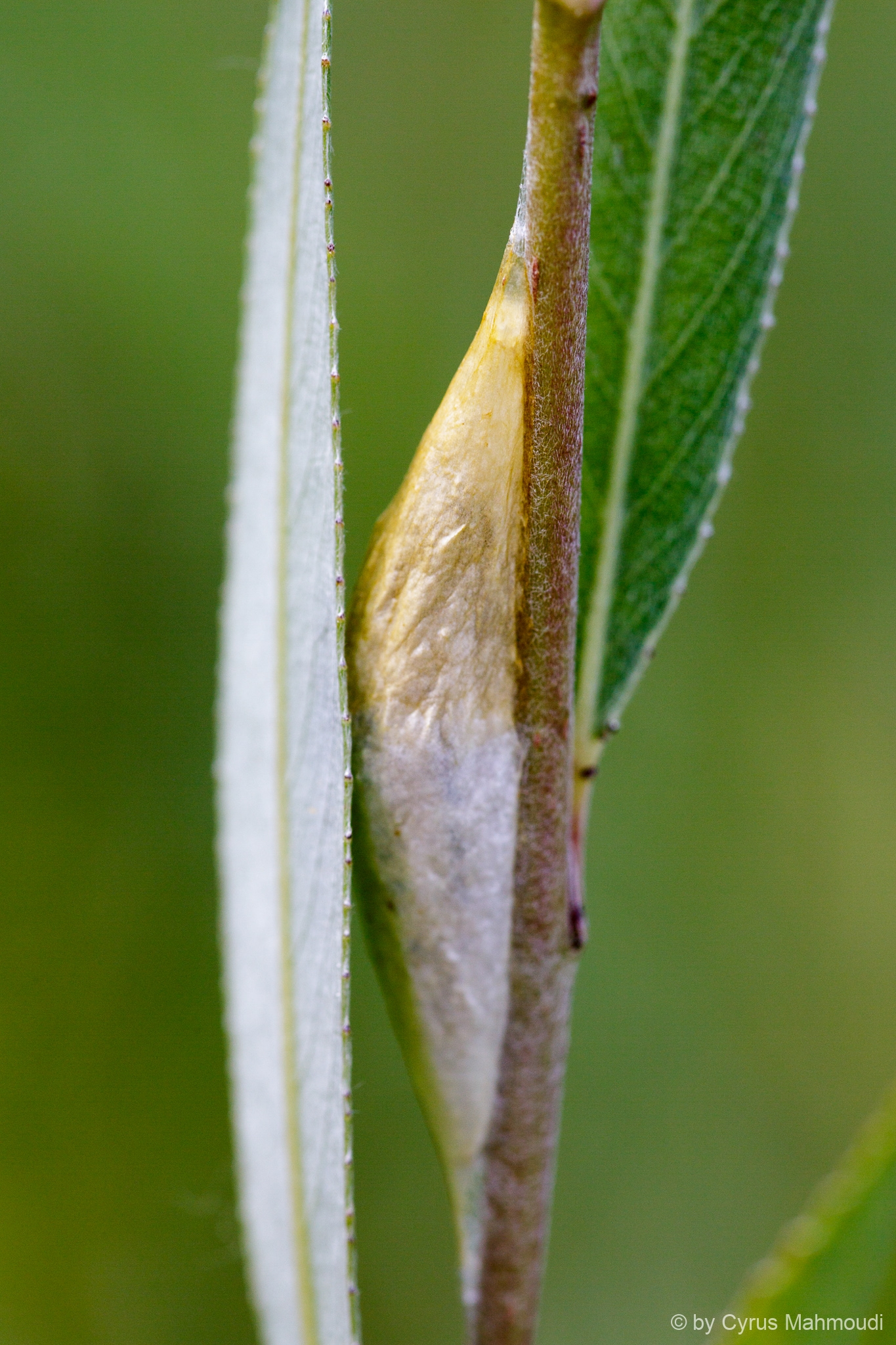 Lepidoptera-88