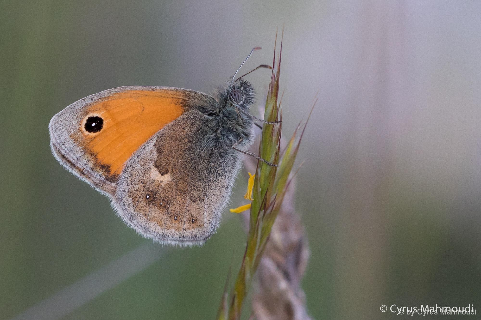 Lepidoptera-89