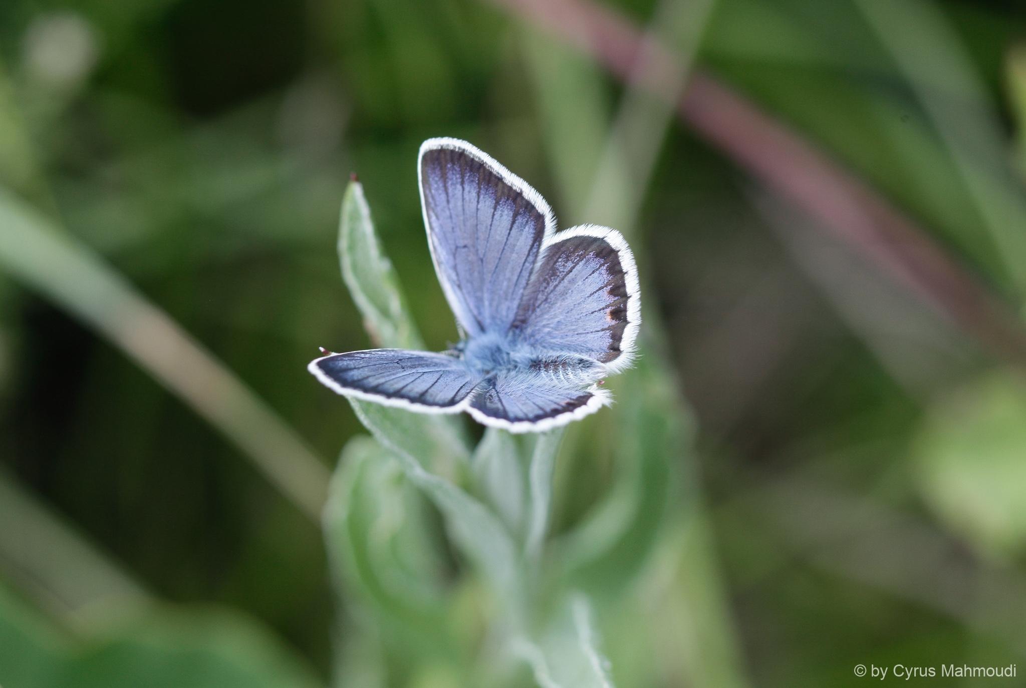 Lepidoptera-9-2