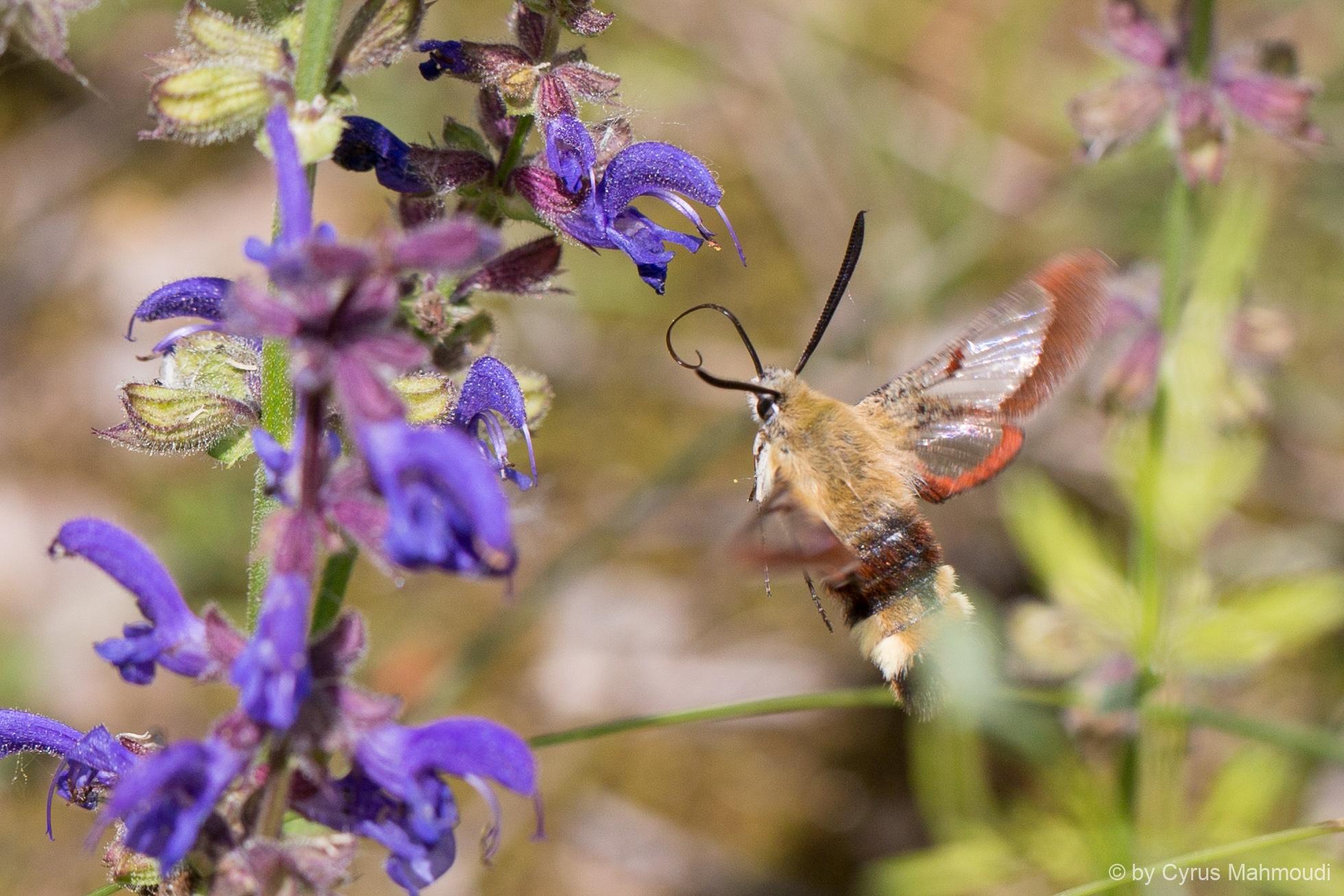 Lepidoptera-95