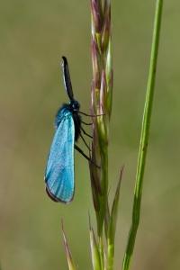 Lepidoptera-73
