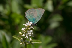 Lepidoptera-93