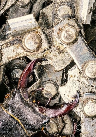 Nr.455 - Chainsaw