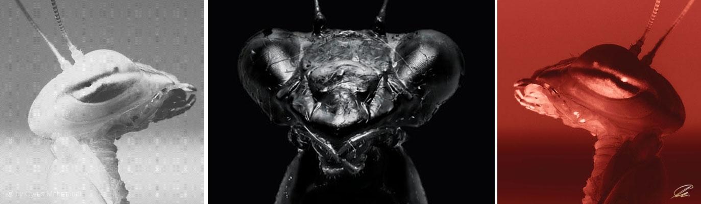 Nr.460 - Mantis religiosa